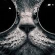 avatar van isostorm