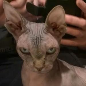 avatar van Tartarus
