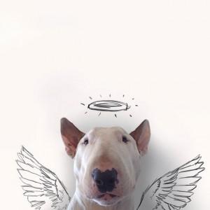 avatar van noamareen