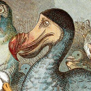 avatar van Visitall