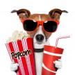 avatar van LikeMovies