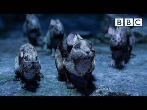 Watership Down's brave rabbits make a daring escape - BBC